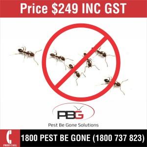 Ants $249